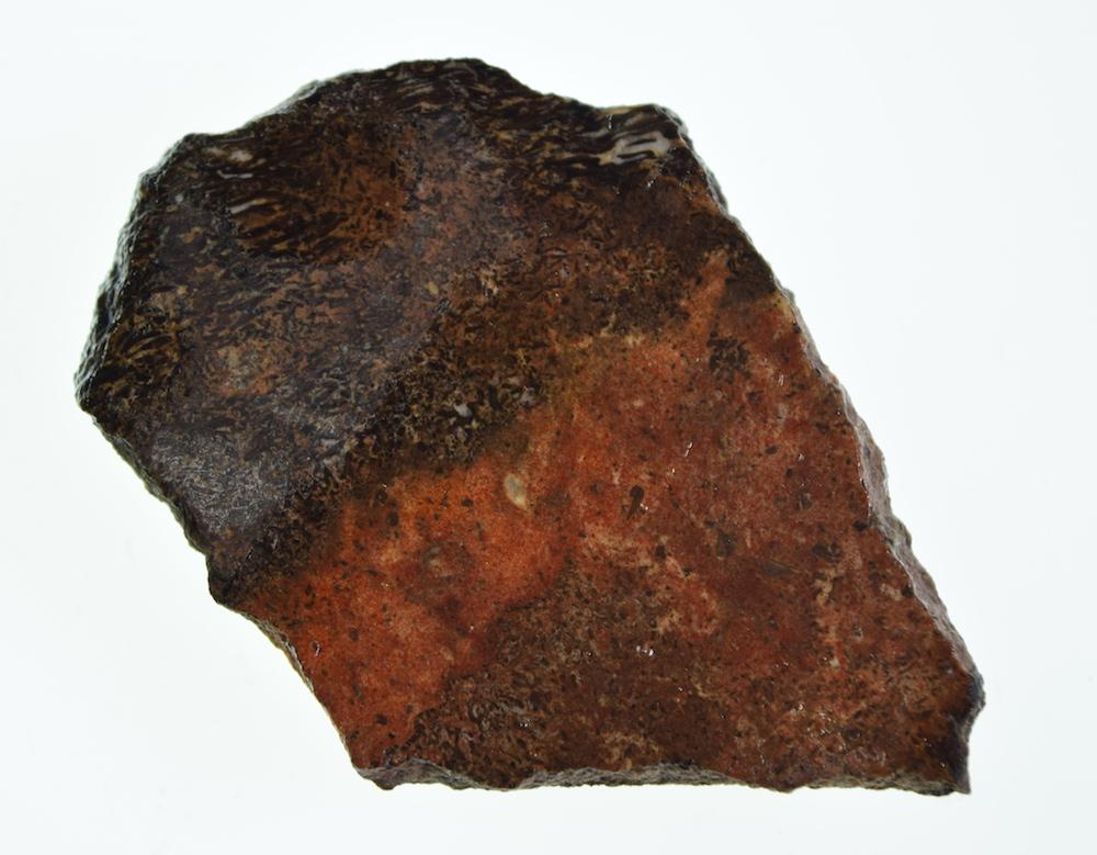 #4161 Dinosaur Gem Bone Lapidary Slab 1
