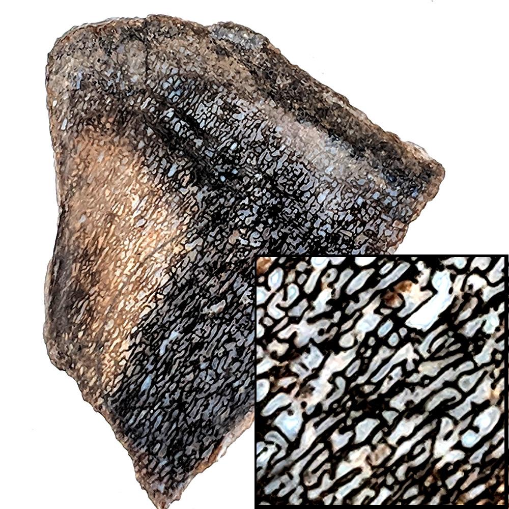 #4499 Dinosaur Gem Bone
