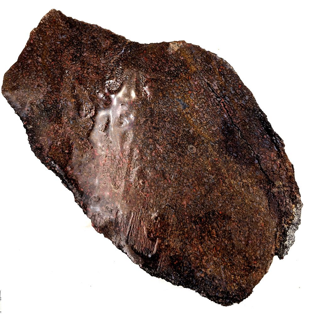 #5227 Dinosaur Gem Bone