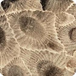 Petoskey Stone Lapidary Slabs