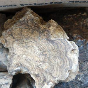 Stromatolites - Mushroom Jasper (Fossil Algae)