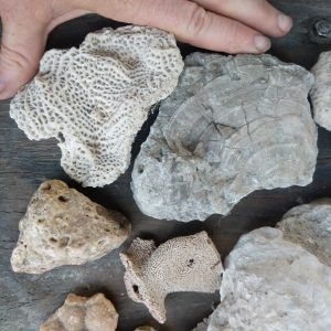 3146-Miscellaneous Fossils
