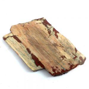 6780-Petrified Wood