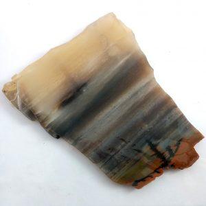6781-Petrified Wood